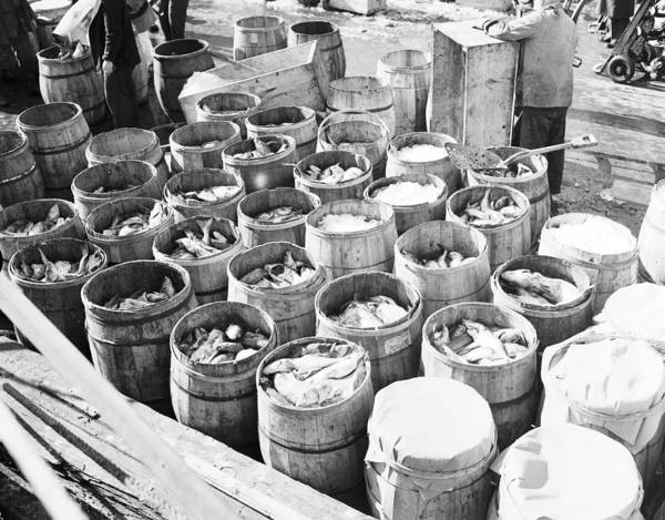 New Market Photograph - Fish For Sale In Barrels At The Fulton by Bert Morgan