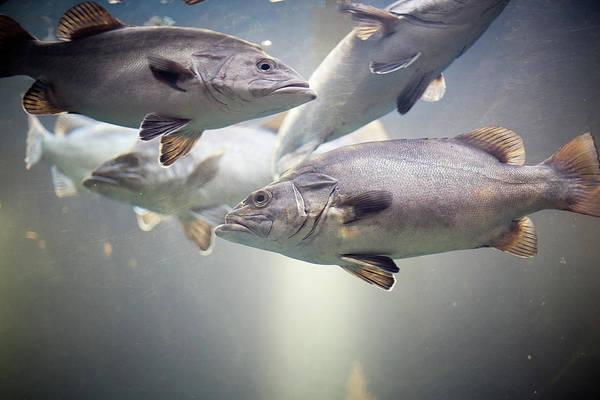 Fish Tank Photograph - Fish In Water Of Tank by Carol Yepes