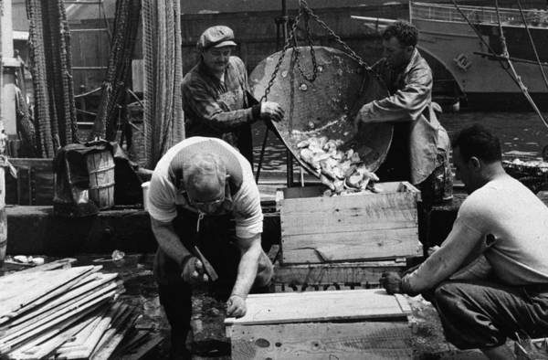 New Market Photograph - Fish Packing by Gordon Parks