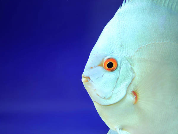 Underwater Photography Photograph - Fish by Photography T.n.t