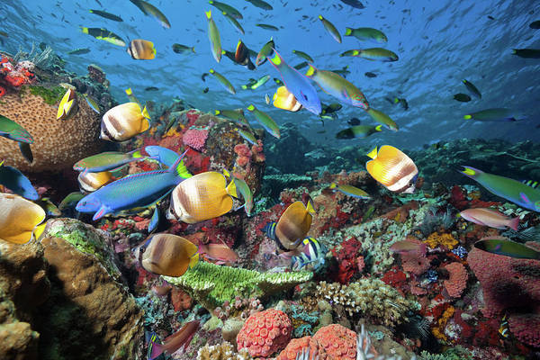 Fish Photograph - Fish Rush Hour At Coral Reef, Komodo by Ifish