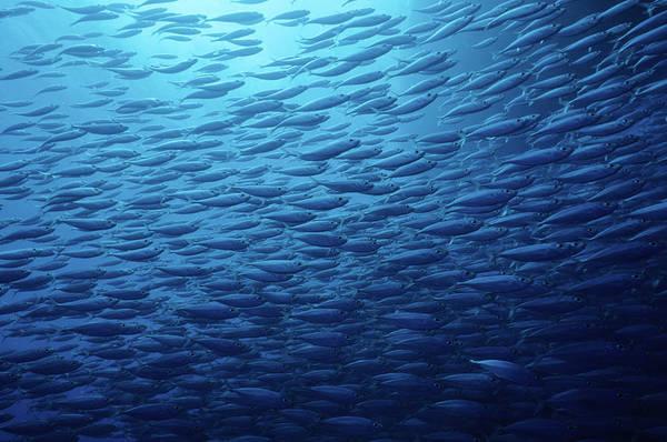 Fish Photograph - Fish School by Tammy616