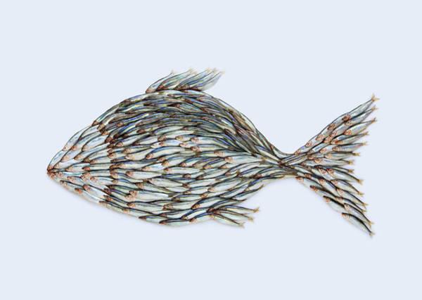 Fish Photograph - Fish Shape Made Up Of Fish by Johanna Parkin