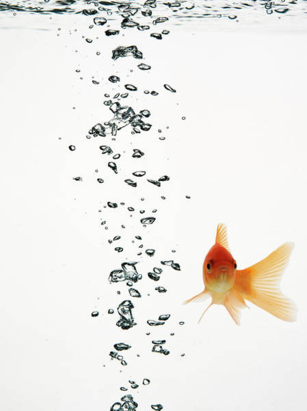 Underwater Camera Photograph - Fish Swimming With Bubbles Water by Walter Zerla