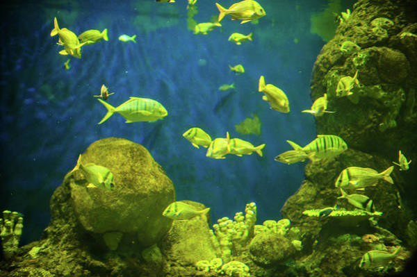 Wall Art - Photograph - Fishes In The Sea by Art Spectrum