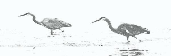 Fishing Blue Herons Art Print