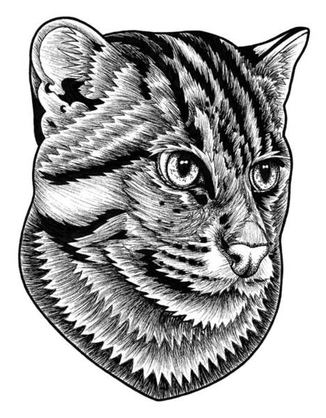 Hand Drawn Drawing - Fishing Cat  Ink Illustration by Loren Dowding