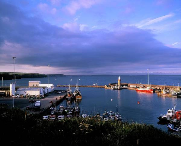 Fishing Boat Photograph - Fishing Harbour In Dunmore East, County by Designpics