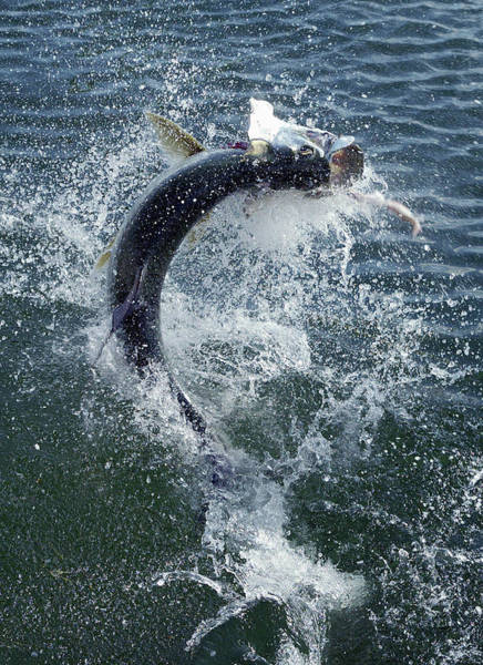 Sport Fishing Photograph - Fishing In The Florida Keys - Tarpon by Ronald C. Modra/sports Imagery