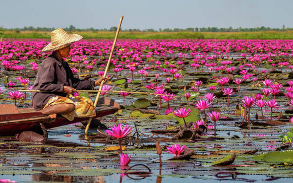 Painting - Fishing In The Red Lotus Lake by Jeremy Holton