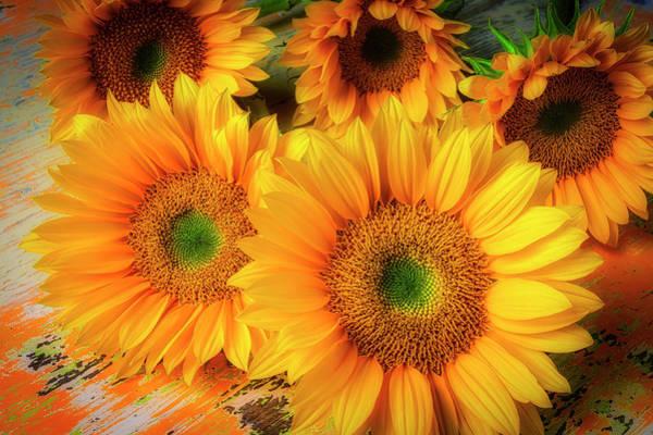 Wall Art - Photograph - Five Beautiful Sunflowers by Garry Gay