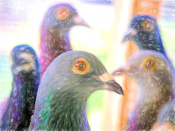 Photograph - Five Homing Pigeons Colored Pencil by Don Northup