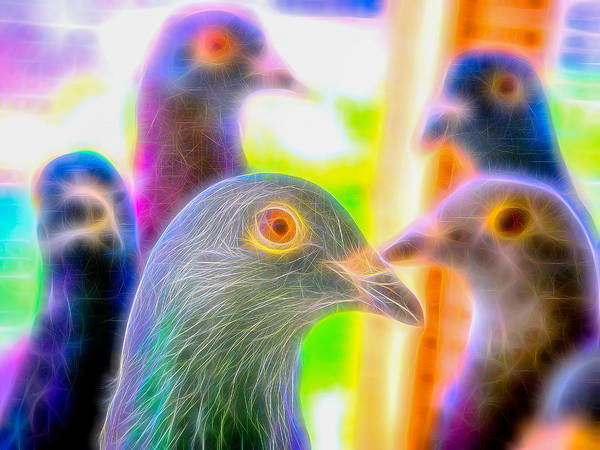 Photograph - Five Homing Pigeons Fibers by Don Northup