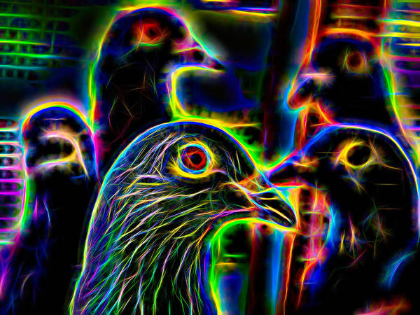Photograph - Five Homing Pigeons Neon by Don Northup