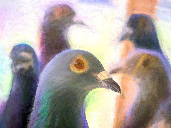 Photograph - Five Homing Pigeons Chalk Smudge by Don Northup