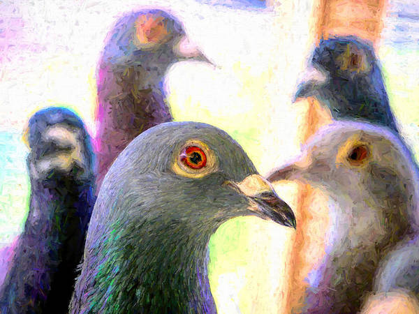 Photograph - Five Homing Pigeons Hopper by Don Northup