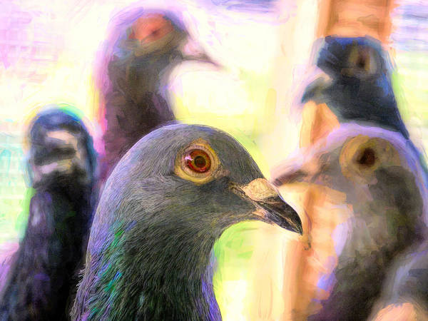 Photograph - Five Homing Pigeons Impasto by Don Northup