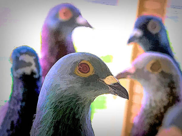 Photograph - Five Homing Pigeons Ink by Don Northup