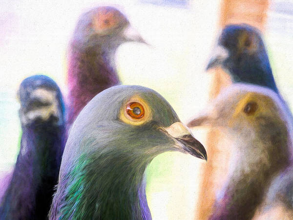 Photograph - Five Homing Pigeons Painted by Don Northup
