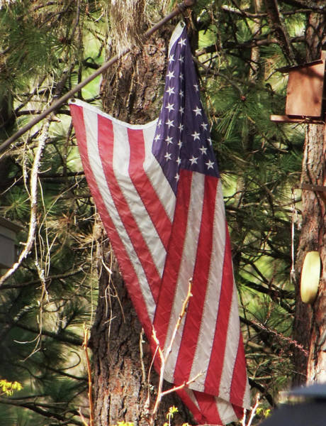 Photograph - Flag In The Woods by Ron Roberts