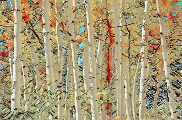 Wall Art - Photograph - Flamboyant Aspens by Donna Kennedy
