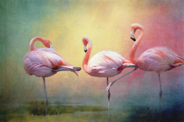 Wall Art - Digital Art - Flamboyant Flamingos by Terry Davis