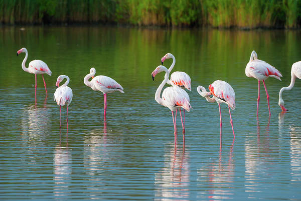 Back In The Day Photograph - Flamengos by Mmac72