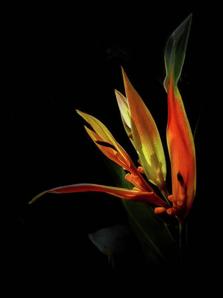 Photograph - Flaming Frond by Cyndy Doty