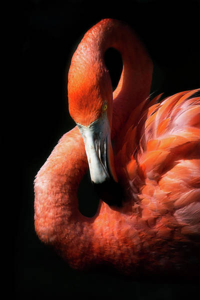 Photograph - Flamingo by Cyndy Doty
