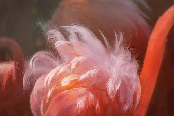 Wall Art - Digital Art - Flamingo Feathers by Terry Davis