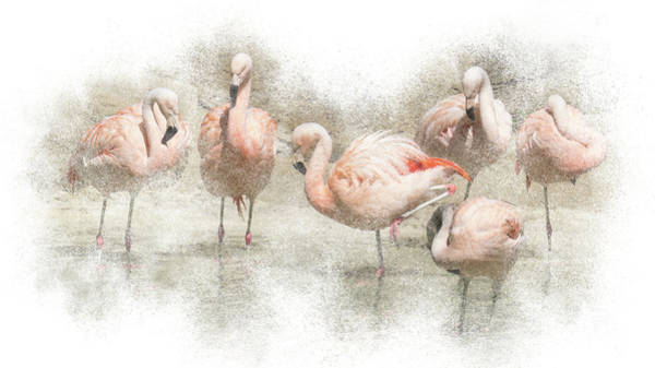 Photograph - Flamingo Flamboyance by Patti Deters