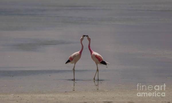 Wall Art - Photograph - Flamingo Greating by Brian Kamprath