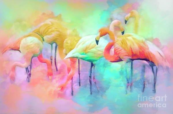 Photograph - Flamingo Rainbow by Brian Tarr