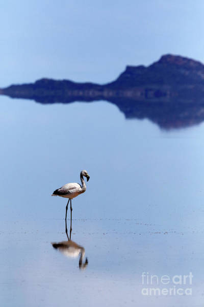 Photograph - Flamingo Reflections Salar De Uyuni Bolivia by James Brunker