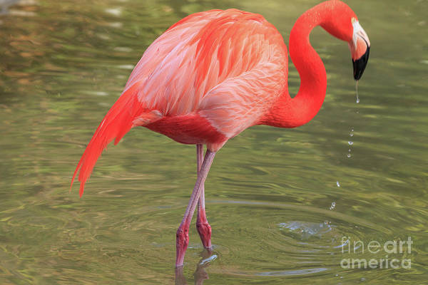 Wall Art - Photograph - Flamingo San Diego by Edward Fielding