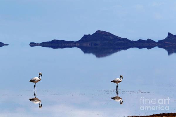 Wall Art - Photograph - Flamingos And Reflections On The Salar De Uyuni Bolivia by James Brunker