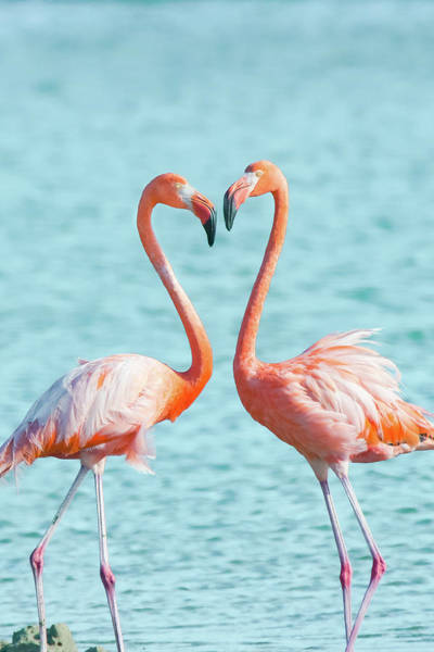 Wall Art - Photograph - Flamingos In Love by Ellie Teramoto
