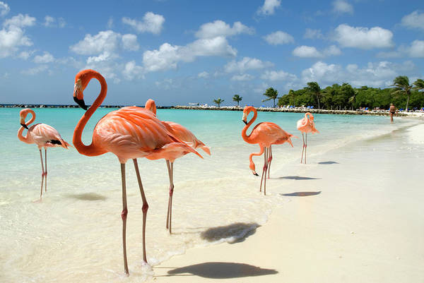 Flamingos On The Beach Art Print