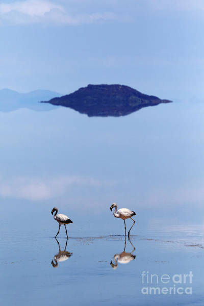 Photograph - Flamingos On The Salar De Uyuni Bolivia  by James Brunker