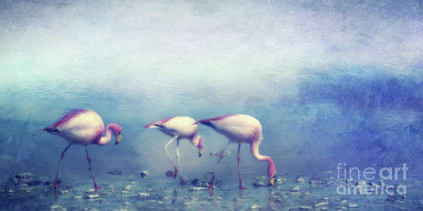 Wall Art - Photograph - Flamingos by Priska Wettstein