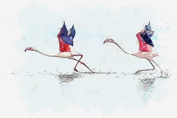 Painting - Flamingos Taking Off -  Watercolor By Ahmet Asar by Ahmet Asar