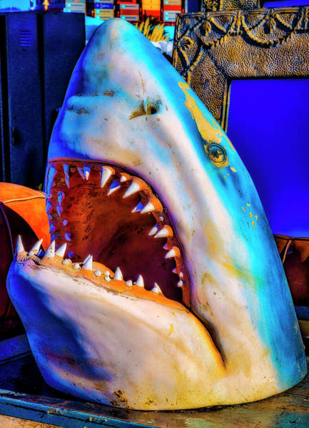 Wall Art - Photograph - Flea Market Shark by Garry Gay
