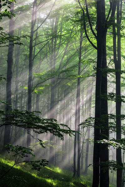 Forests Wall Art - Photograph - Fleeting Beams by Evgeni Dinev