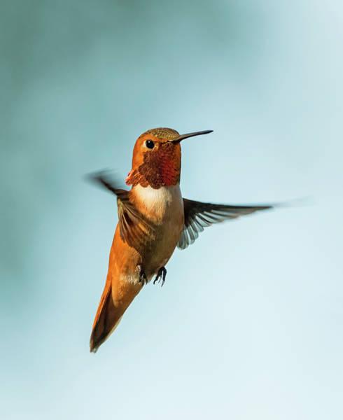 Photograph - Flight Expert by Loree Johnson