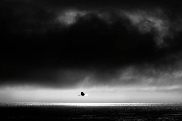 Photograph - Flight Home by John Rodrigues