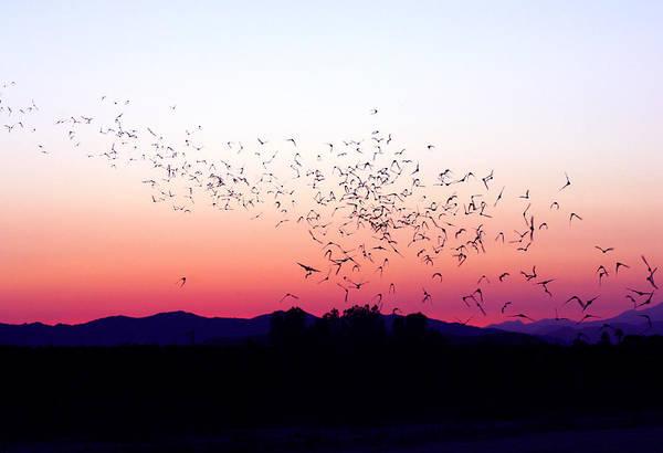 Photograph - Flight Of The Bats by Anthony Jones