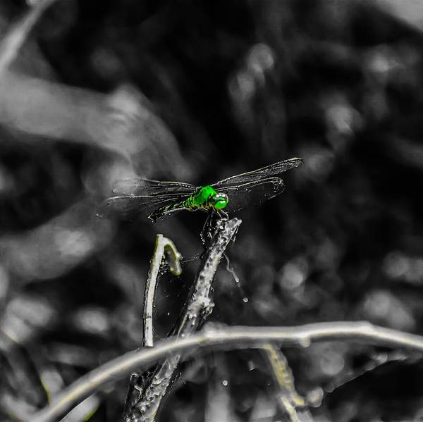 Photograph - Flight Of The Dragonfly  by Jeremy Guerin