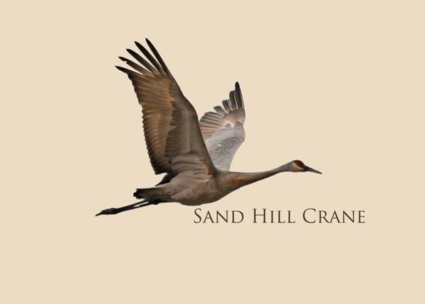 Wall Art - Photograph - Flight Of The Sandhill Crane by Whispering Peaks Photography