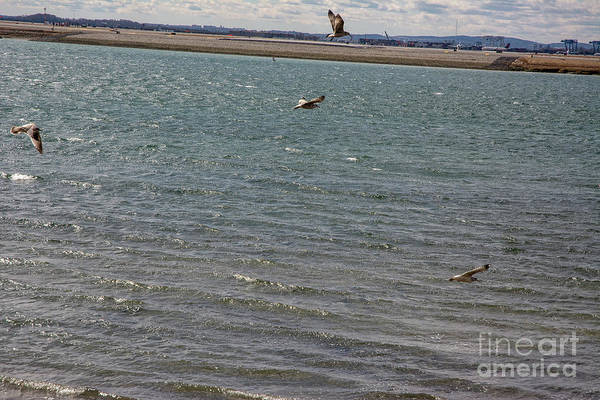 Photograph - Flighty Seagulls by Ruth H Curtis