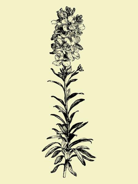 Wall Art - Mixed Media - Floating Flower I by Naxart Studio